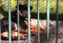 """صورة في حديقة حيوان صينية.. """"أغرب فعلة"""" بكلب أليف"""