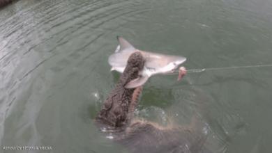 """صورة تمساح يحطمُ """"كبرياء"""" القرش.. اصطاده بعناد أمام عدسة الكاميرا"""